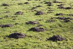 Molehills Royalty Free Stock Photo