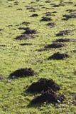 Molehills Royalty Free Stock Photos