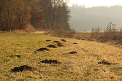 Molehills on forest clearing Royalty Free Stock Photo