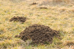 Molehills on forest clearing Royalty Free Stock Photography