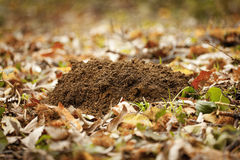 Molehills in garden Royalty Free Stock Photography