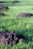 Molehills in the garden Stock Photography