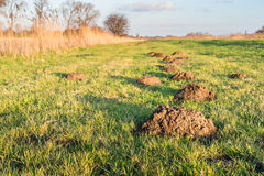 Molehills in the low sunlight Royalty Free Stock Photos