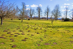 Molehills in a park Stock Photography
