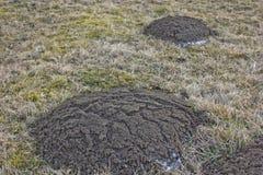 Molehills Stock Image