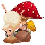 A molehog playing near the giant red mushroom Stock Photography
