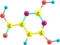 Molekylär struktur för Orotic syra som isoleras på vit Arkivfoton