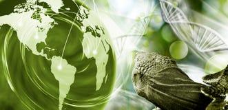 molekylär struktur, kedja av dna, abstrakt planet och sköldpadda på en grön bakgrund Royaltyfri Bild