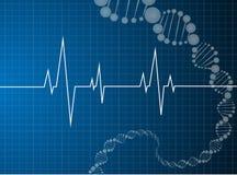 Molekyl för dna för hjärtatakter Arkivfoton