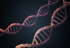 Molekylar för dubbel spiral för DNA på svart bakgrund framförd illustration 3d Royaltyfria Bilder