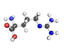 molekylär struktur för syrlig amino arginine Arkivbilder
