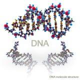 Molekylstruktur av DNA:t royaltyfri illustrationer