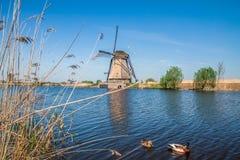 Molens van Kinderdijk Royalty Free Stock Photography
