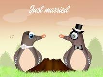 Moles couple Stock Photography