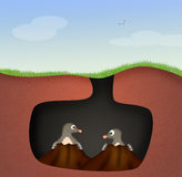 Moles in the den. Illustration of moles in the den Stock Photo