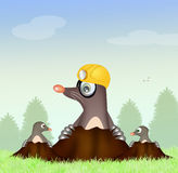 Moles in the den. Illustration of moles in the den Royalty Free Stock Images