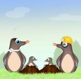 Moles family Stock Photos