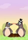 Moles in love Royalty Free Stock Image