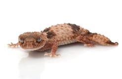molette réunie de gecko suivie photo libre de droits