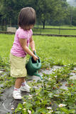 Molhando as plantas Fotografia de Stock Royalty Free
