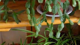 Molhando as plantas dentro no inverno video estoque