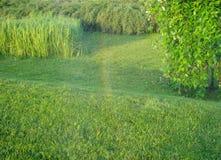 Molhando o grass2, esverdeie a paisagem imagem de stock royalty free
