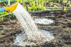 Molhar abundante das plantas no furo da lata molhando do jardim foto de stock