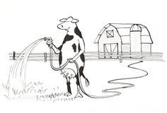 Molhar da vaca Foto de Stock Royalty Free