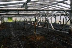 Molhar de torneira da água as plantas em uma estufa Sistema de extinção de incêndios automático com mangueira de borracha Água de imagem de stock royalty free