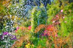 Molhar do sistema de extinção de incêndios no jardim do verão Imagem de Stock