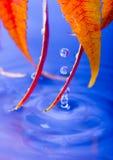 Molhe as folhas Imagens de Stock Royalty Free
