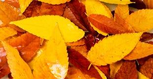Molhe as folhas Fotos de Stock