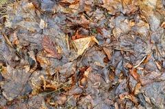 Molhe as folhas caídas Fotos de Stock Royalty Free