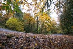Molhe as folhas caídas no lado da estrada na floresta do outono Fotografia de Stock