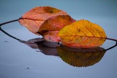 Molhe as folhas no fundo brilhante Foto de Stock