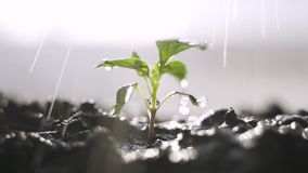 Molhe as plantas no jardim vídeos de arquivo