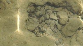Molhe com qual você pode ver a parte inferior do mar e das rochas filme