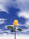 Molhe cor-de-rosa Imagem de Stock Royalty Free