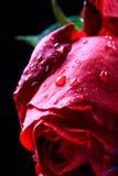 Molhe cor-de-rosa fotos de stock