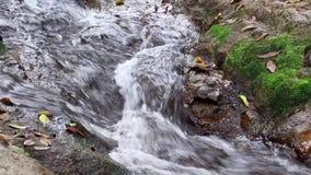 Molhe a corrida de fluxo do córrego sobre rochas e musgo em um ribeiro da cachoeira na floresta tropical video estoque