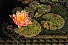 Molhe a flor imagens de stock