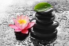 Molhe gotas em pedras pretas dos termas com flor do lírio Imagem de Stock Royalty Free