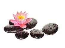Molhe gotas em pedras pretas dos termas com flor do lírio Imagens de Stock Royalty Free