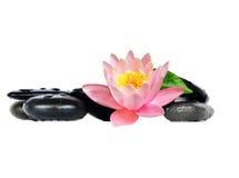 Molhe gotas em pedras pretas dos termas com flor do lírio Fotos de Stock Royalty Free