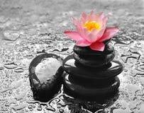 Molhe gotas em pedras pretas dos termas com flor do lírio Fotografia de Stock