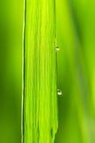 Molhe gotas em uma folha verde Imagens de Stock Royalty Free