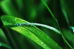 Molhe gotas em uma grama após a chuva Fotos de Stock