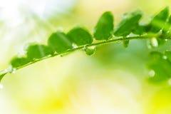 Molhe gotas na folha verde fresca Imagens de Stock Royalty Free