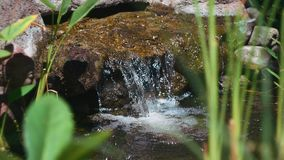 Molhe o córrego que cai da rocha na lagoa com grama ao redor vídeos de arquivo