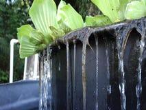 Molhe o corredor de uma lagoa da planta nas Caraíbas vídeos de arquivo